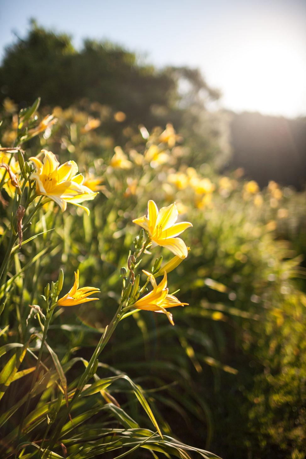 Blumen, Brasilien 2010